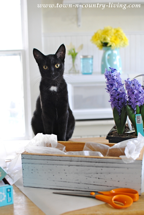 Kitty Helps Plant Spring Bulbs