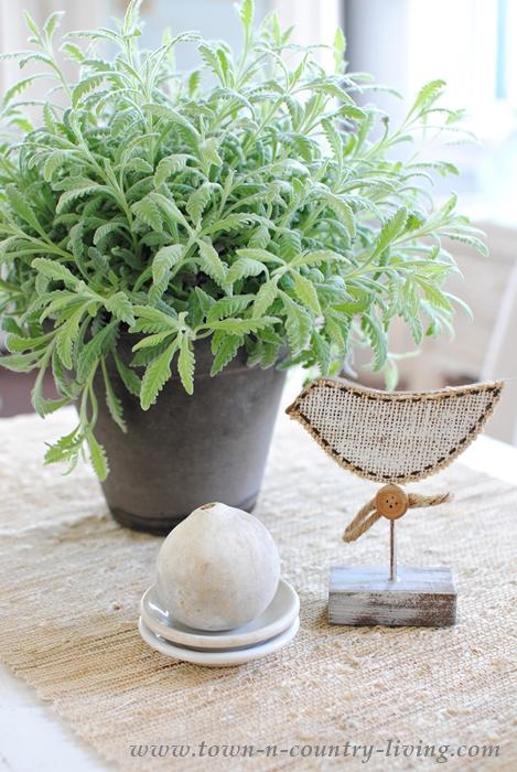 Lavender Houseplant