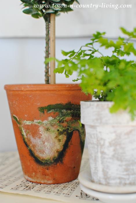 Mossy Garden Pot