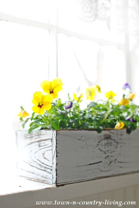 Easy Spring Decorating. Pansies in a White Wood Box