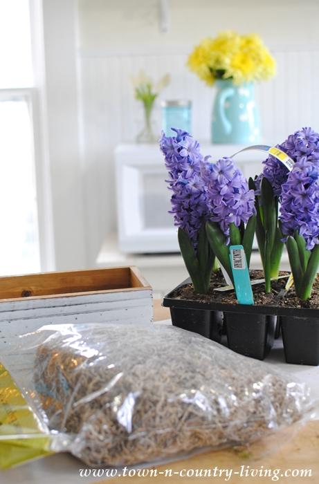 How to Make a Spring Bulb Centerpiece