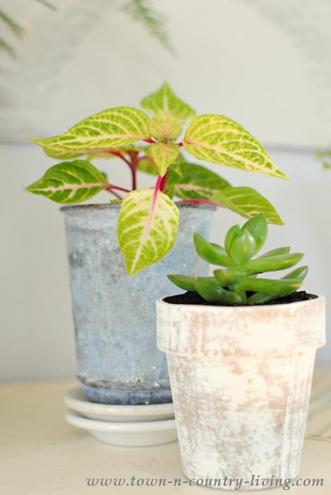 Create a Botanic Style Spring Mantel
