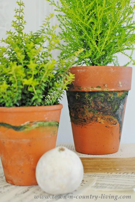 Mossy Garden Pots