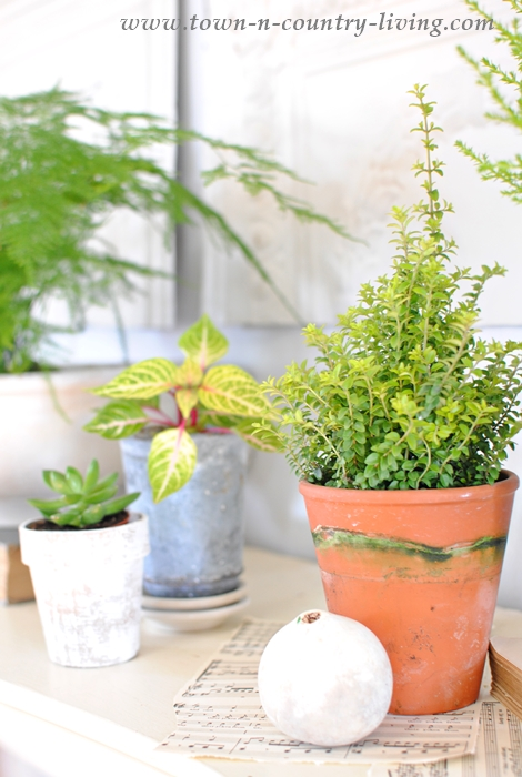 Create a Botanic Look for Your Spring Mantel