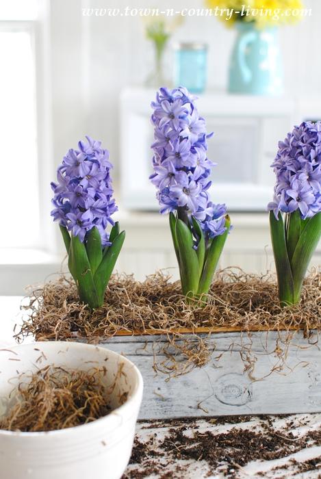 Spring Bulb Centerpiece