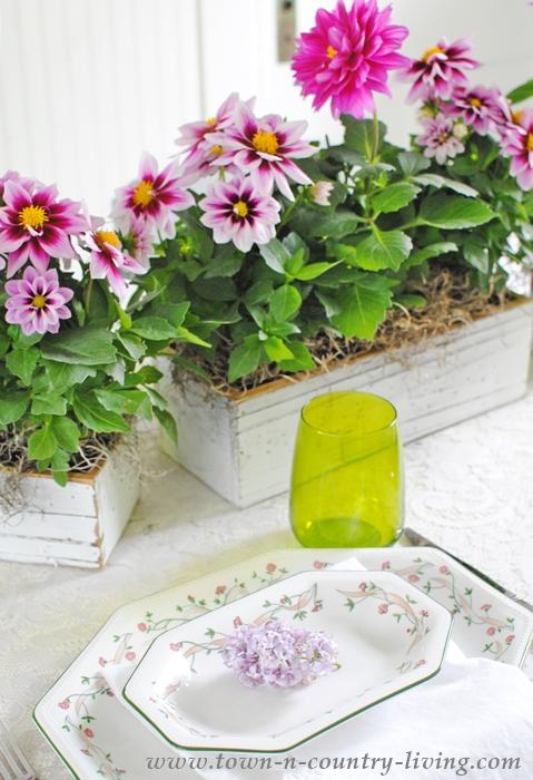 Dahlia Centerpiece for Spring Table Setting