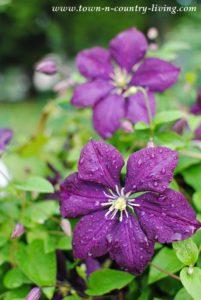 What's In My June Garden