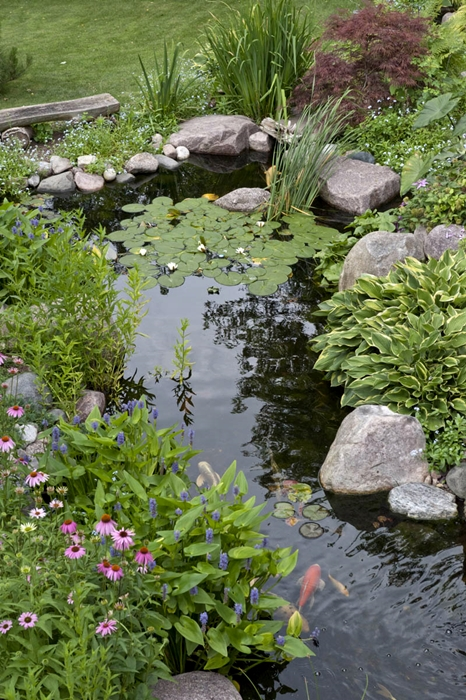 Create a paradise with a backyard pond town country living for Backyard pond plants and fish