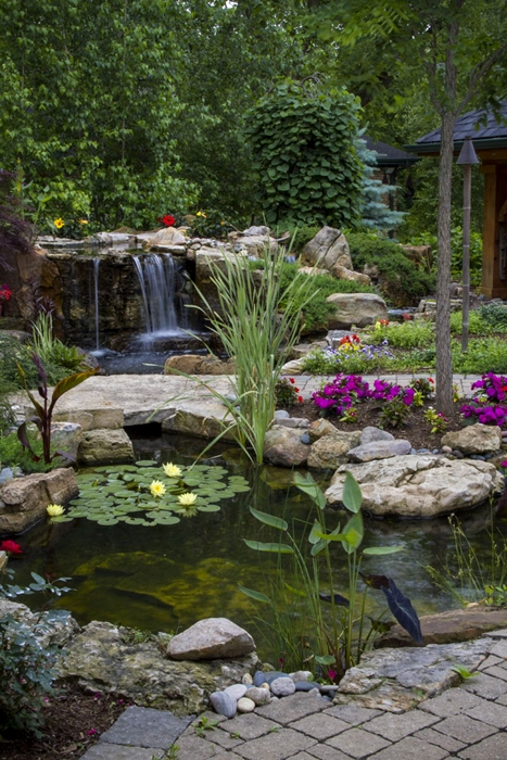 Create a paradise with a backyard pond town country living for Koi pond plants