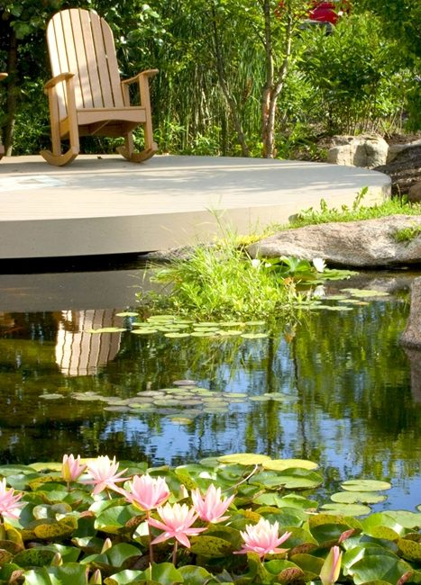 Create a Paradise with a Backyard Pond