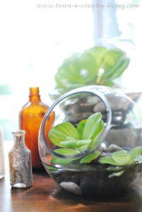 Water Lettuce Arrangement: No Flowers Needed