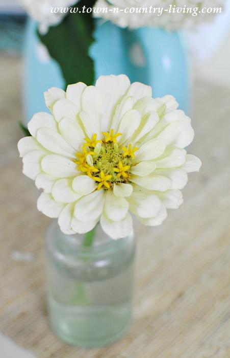 Creamy White Zinnia