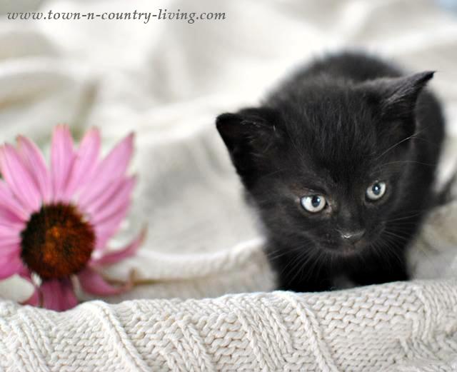 Bella. A little rescue kitty.