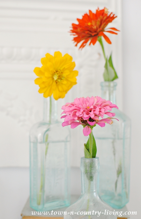 Collection of Zinnias