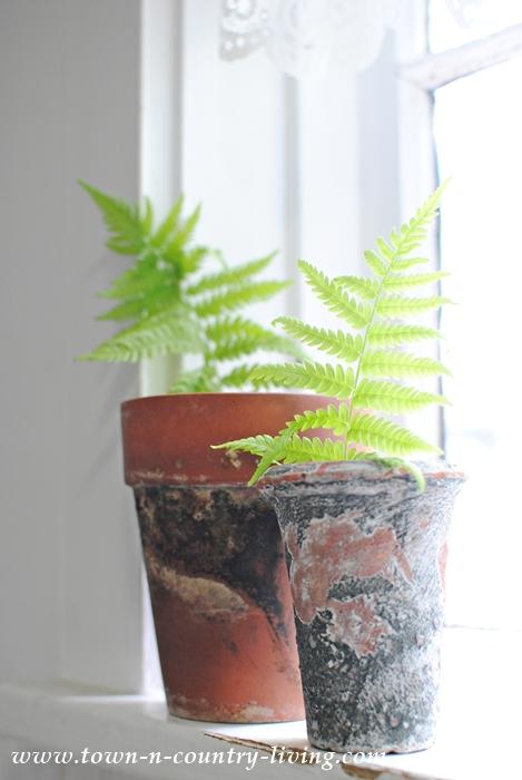 Ferns in Garden Pots on a Kitchen Windowsill