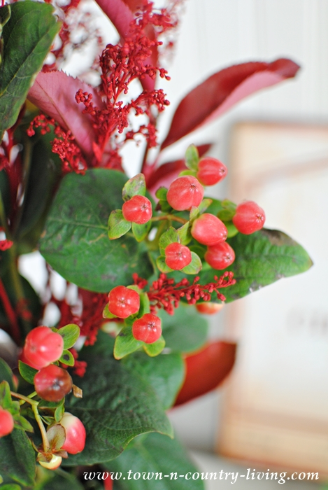 Fall Berries for Arranging Flowers