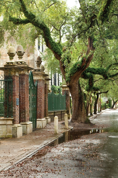 Romantic Street in Historic Charleston