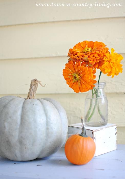 Pumpkins and Zinnias