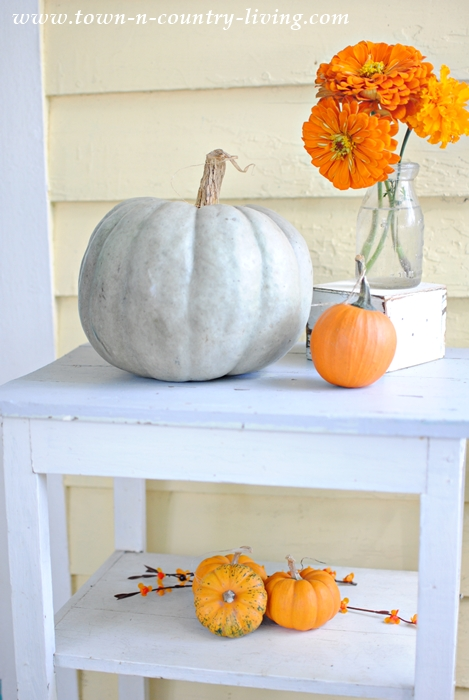 Gray Pumpkin and Orange Zinnias