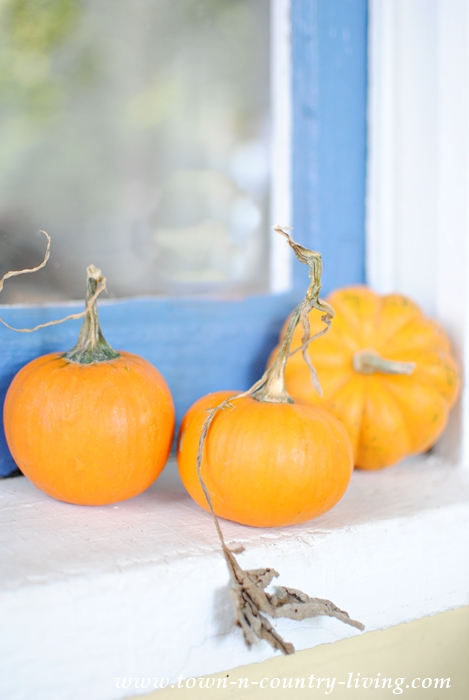 Trio of Tiny Pumpkins on a Farmhouse Windowsill