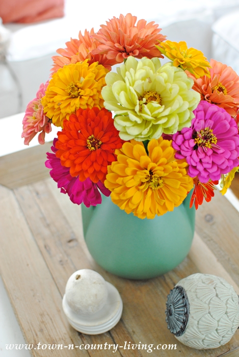 Bouquet of Zinnias