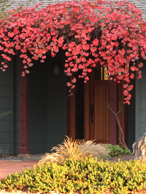 Contemporary Front Porch in the Fall