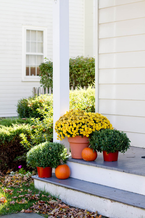 Outdoor Fall Decorating with Mums