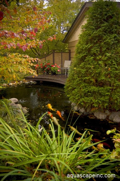 Fall Landscape with Koi Pond