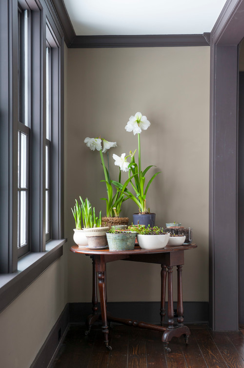 Winter Bulbs and Other Winter Decorating Ideas