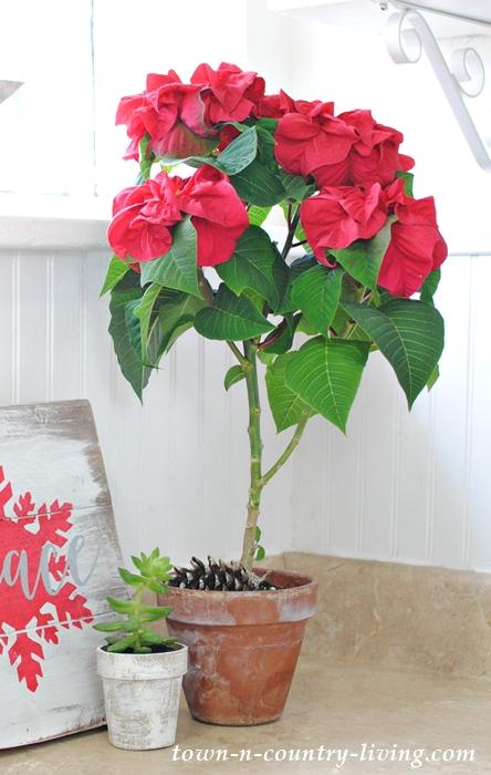 Christmas Rose Poinsettia Topiary