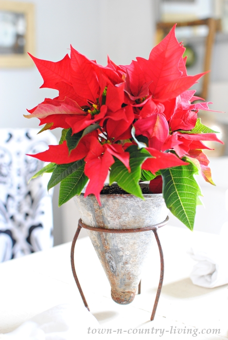 Cone-Shaped Tin Flower Pots with Teacup Poinsettias