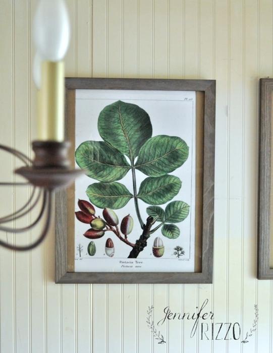 Framed Botanical Prints by Jennifer Rizzo