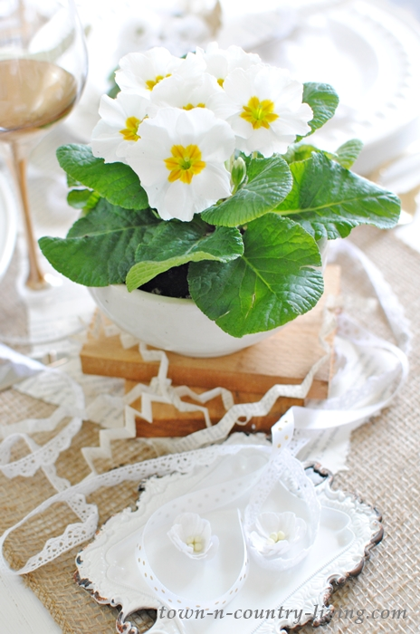White Primrose Flowers in White Ironstone Bowl