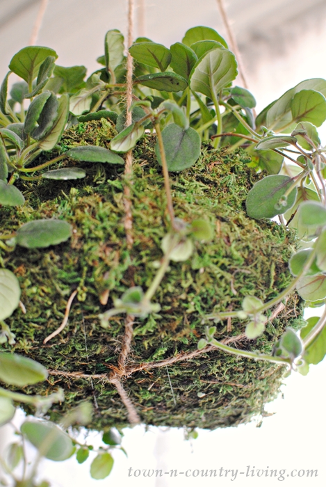 How to hang a planted moss ball using jute twine