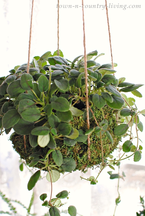 Create a moss basket to hang your store-bought houseplants