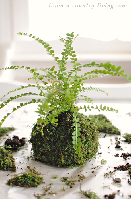 Houseplant potted in moss ball