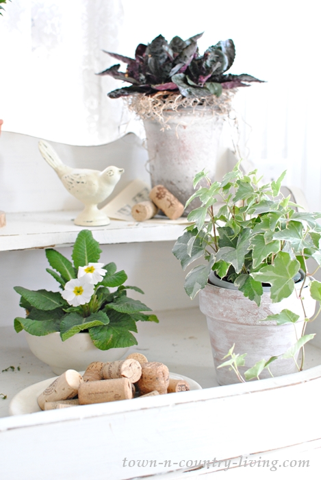 Upgrading houseplants with easy ideas.