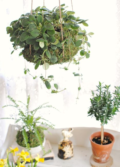 Upgrading Houseplants. Creative Ways to Get a Custom Look