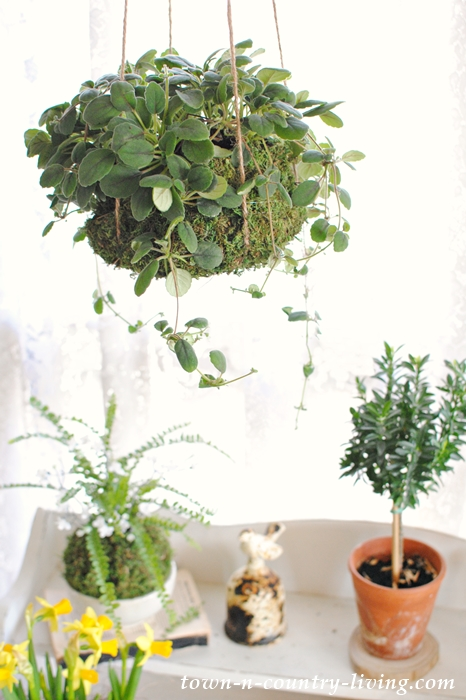 Upgrading Houseplants. Creative Ways to Get a Custom Look