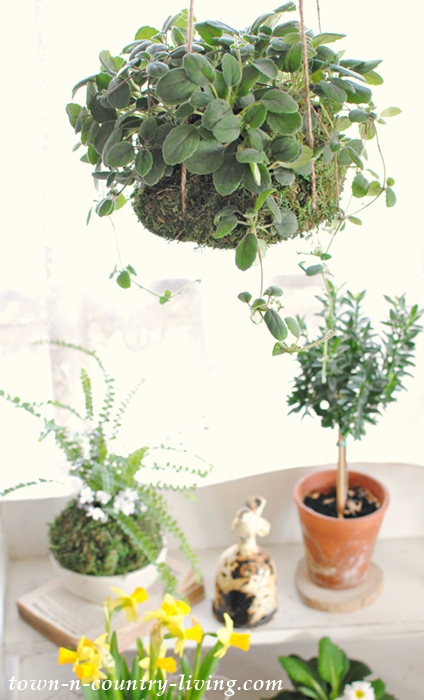 Creative Ways for upgrading your houseplants