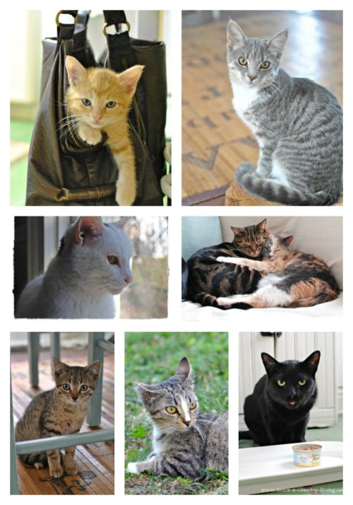 Kitty Collage. Just a few of the furry friends we've helped.