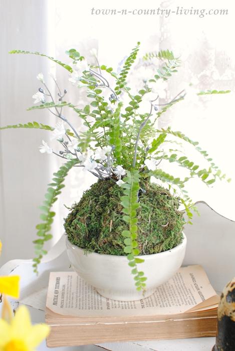 Upgrading Houseplants with Sheet Moss