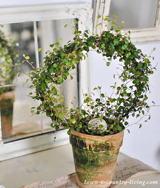 Topiary, baby tears, house plants, garden pots, mossy pot, terra cotta pot, decorating with plants