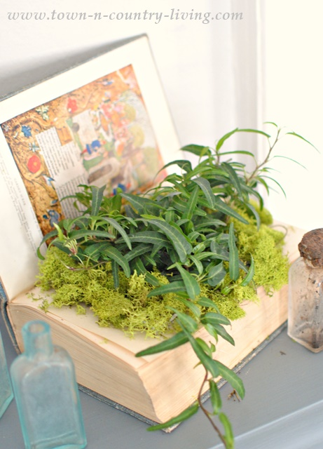 book planter, ivy, decorating with plants, creative planters and garden pots
