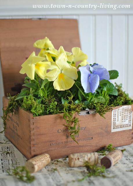 Cigar box planter, pansies, house plants, unique garden planters, decorating with plants