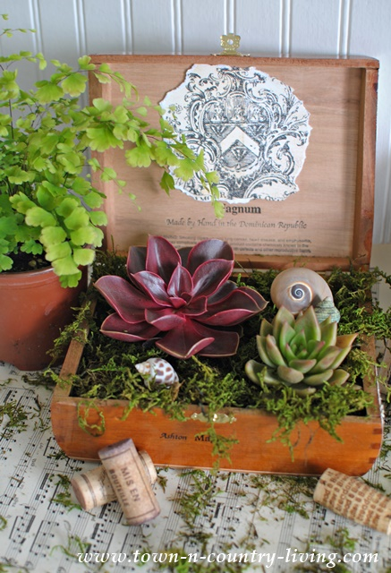 Cigar box planter, sucuulents,, house plants, unique garden planters, decorating with plants