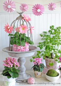 Garden Pots and Plants to Brighten Your Home