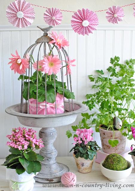 Garden Pots and Plants. spring flowers, pink flowers, gerbera daisy, cyclamen, spring pots, garden pots, flower arrangement, floral arrangement