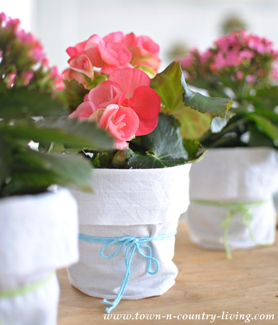 shabby chic garden pot, begonia, decorating with plants, creative planters
