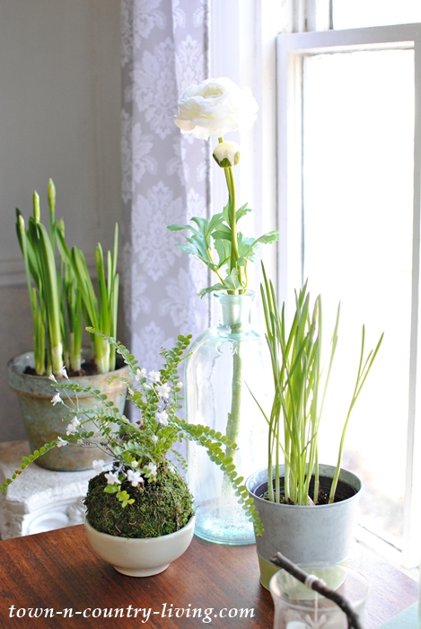 Spring Plants and Flowers. Ferns and Paperwhites